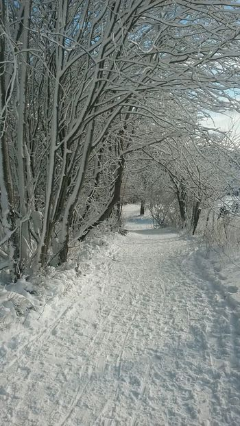 Winter Cold Temperature Snow Tree Weather Nature Beauty In Nature Outdoors Bare Tree No People Frozen Day Landscape Forest Branch Snowing Frozen No People , WINTER