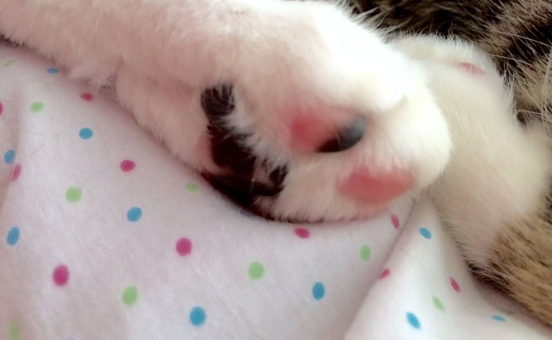 It is too hot to do anything at all. My poor kitties can't lift a paw. Why don't you all HIT ME WITH YOUR BEST PAW to cheer us up? Have a lovely Sunday, stay cool! Hanging Out Cat Lovers Tadaa Cat♡ Tadaa Community Pet Photography  Tadaakitties Tadaa Friends Cats