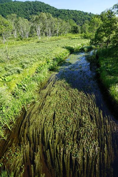 Waterweed Landscape Nature_collection EyeEm Best Shots EyeEm Nature Lover