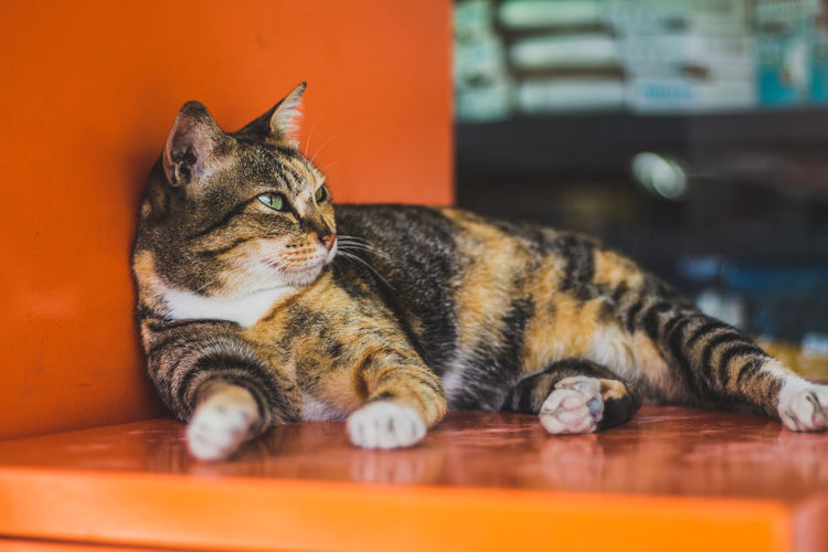 Close-up of cat looking away while relaxing on orange container