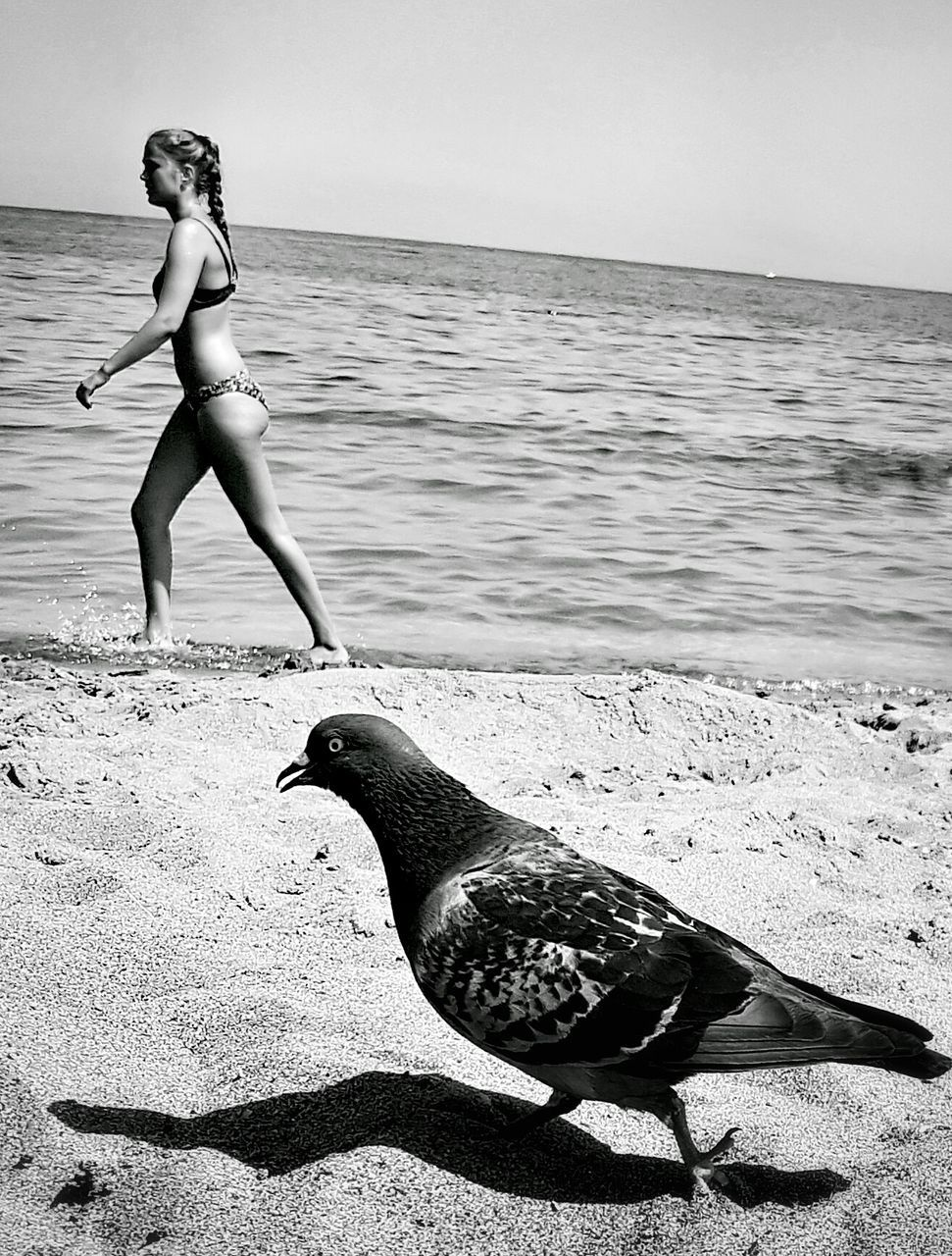 sea, water, beach, full length, bikini, sand, one person, outdoors, animal themes, young adult, bird, nature, animals in the wild, beauty in nature, real people, day, young women, people