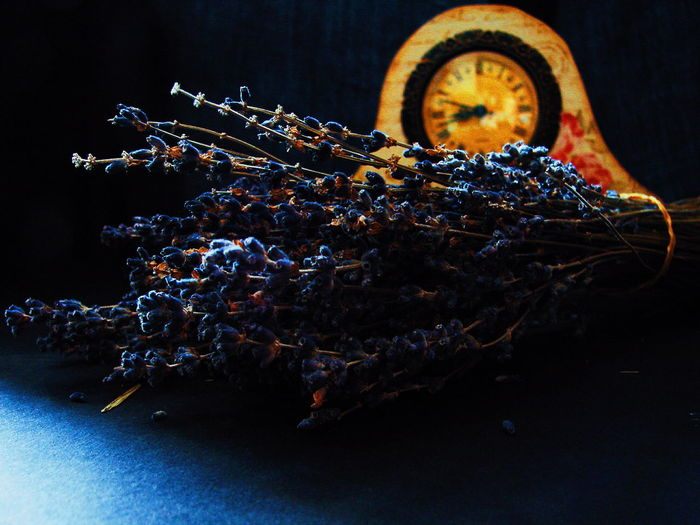 Dried Bouquet Lavender Flowers Darkness And Beauty Dark Photo Dark Background Dried Flowers No People Plant Close-up Vintage Look