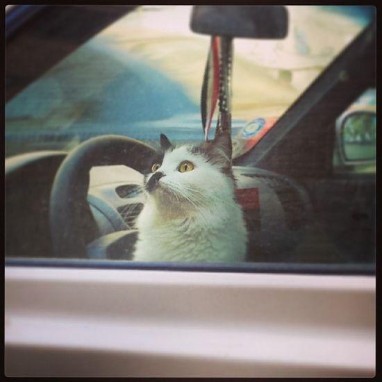 Cat Kitten Car Verna sandy street driving beautiful pretty S4 love staring window