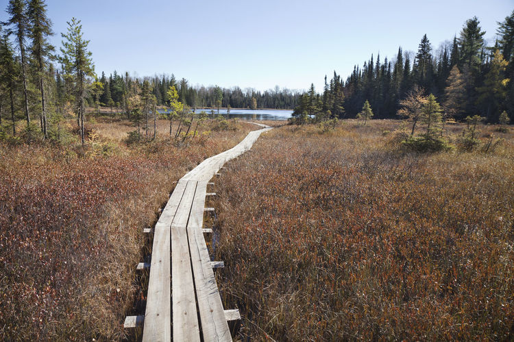 Wooden walkway leads to a small trout lake in northern Minnesota Tree Nature Beauty In Nature Outdoors Forest Landscape Lake Path Wood - Material Walkway Pine Tree North Minnesota Woods Fishing USA Autumn Fall Superior National Forest Bog Blue Sky Sunlight Trout Photography No People