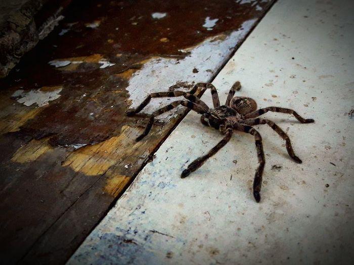 Visitor Animals In My Garden Visitas Animales De Mi Jardin Río Espera Dekta Tigre Islas Del Delta Insect Spider High Angle View Close-up Animal Themes