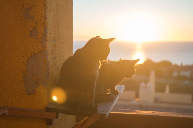 Cats sitting on wooden plank against sky during sunny day