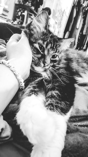 It's hard to capture how sweet she is. Cat 😻 Authentic Moments 💙 Cat Collection Cat Watching Cats Of EyeEm GG The Cat Cat Lovers Cats Cat Cat♡ I Love My Cat Animals Animal I Love Animals Animal Themes