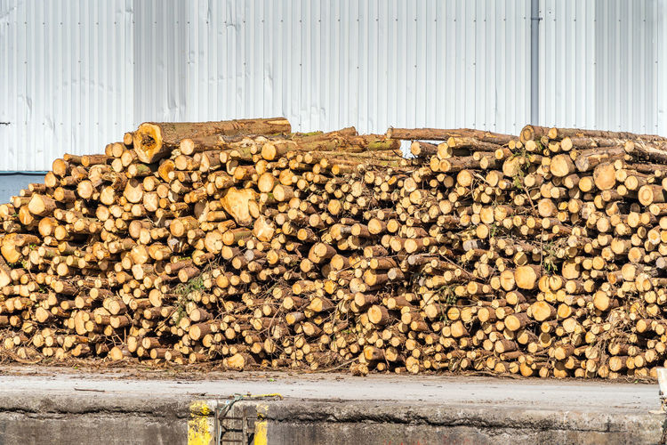 Stack of logs against wall in forest