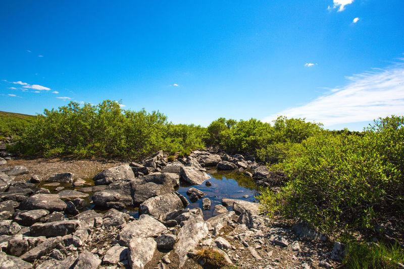 Plants growing on rocks against blue sky