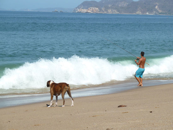 Beach Best Friend Dog Domestic Animals Fishing Mexican Beach Mexican Boy Pacific Ocean Pets Sea Sunny Day Surf Water Wave Waves