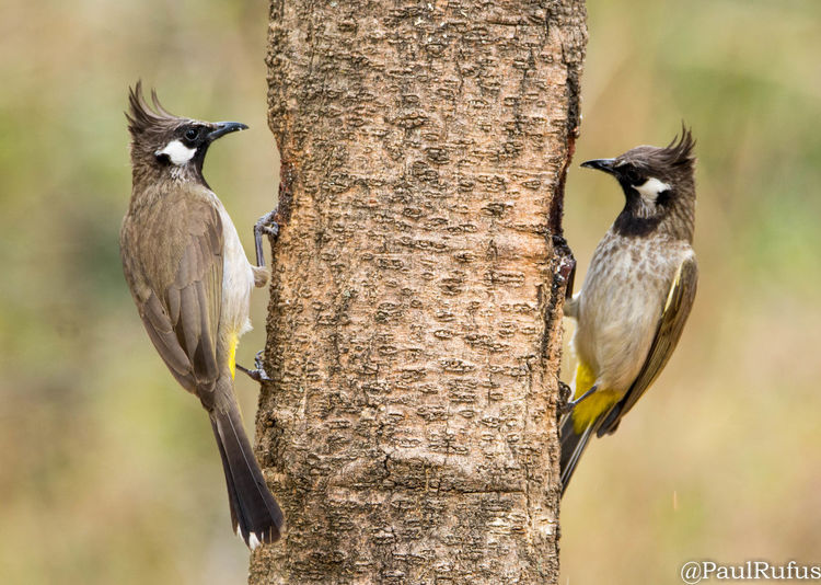 Bird Day No People Wildlife Wildlife & Nature Nature_collection Nature Photography Portrait Outdoors Outdoor Photography Tree Forest Photography Photographer