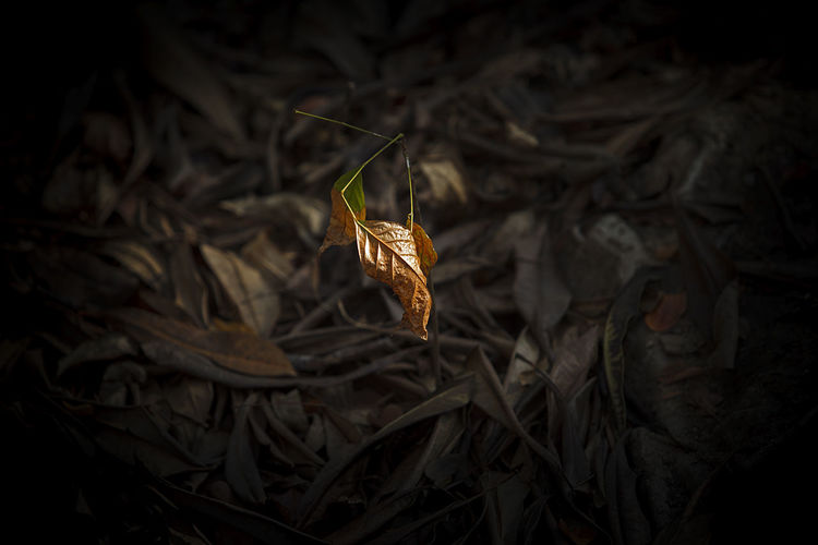 Close-up of dried plant on field during autumn