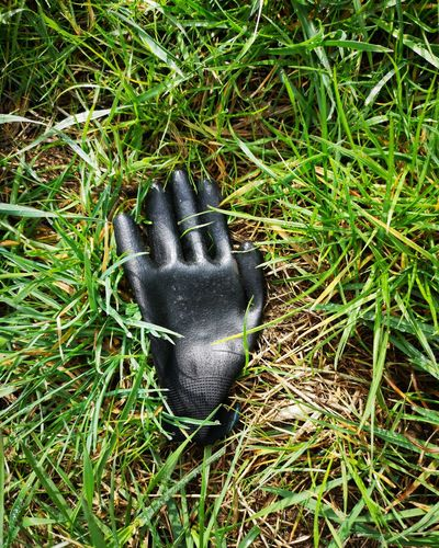 Glove High Angle View Close-up Grass Growing Full Frame Field Backgrounds Detail Farmland Textured