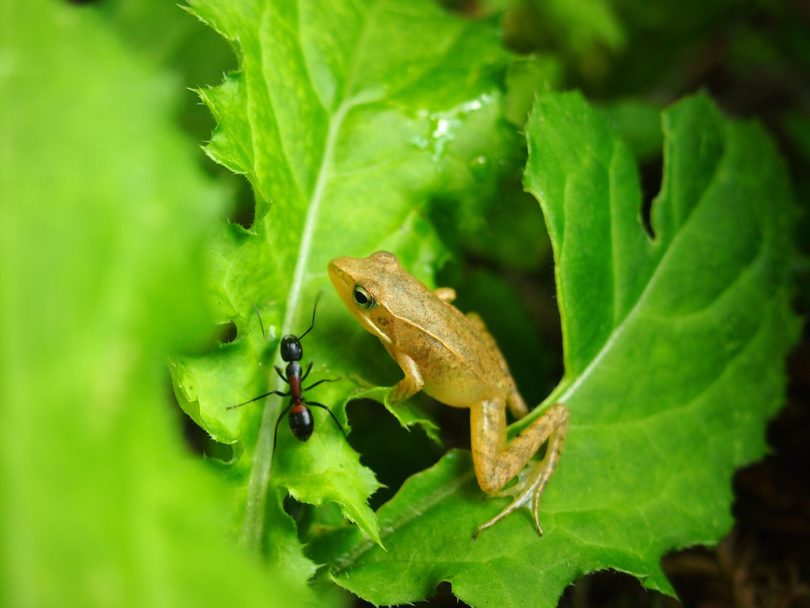animals in the wild, animal themes, wildlife, insect, one animal, leaf, green color, close-up, plant, nature, focus on foreground, growth, selective focus, beauty in nature, outdoors, day, high angle view, no people, green, zoology