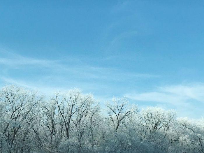 Snow trees Sky