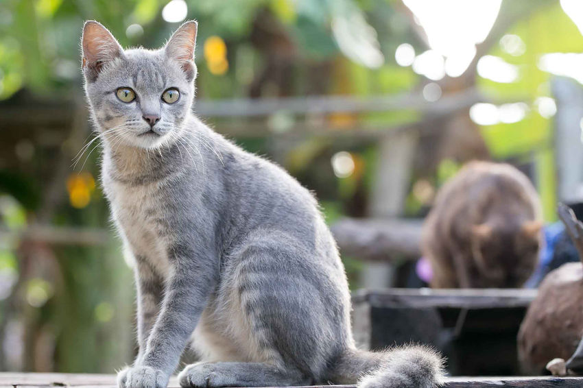 Domestic Domestic Animals Pets Mammal Cat Domestic Cat Feline One Animal Focus On Foreground Portrait Vertebrate Looking At Camera Sitting Day People Outdoors Close-up Whisker