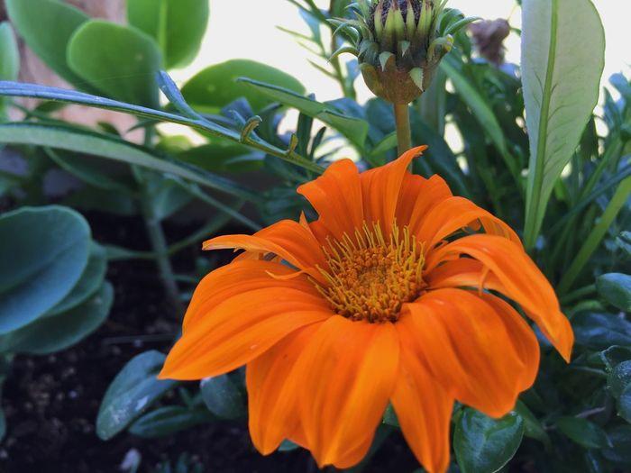 Showcase: April Orange Flowers Orange Flower Nature