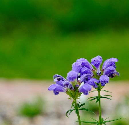 Flower close-up... Flowering Plant Flower Vulnerability  Fragility Plant Beauty In Nature Freshness Close-up Purple Focus On Foreground Flower Head Nature No People Botany Outdoors Plant Stem
