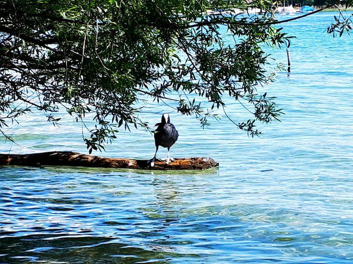 Bird Perching Water Tree Cormorant  Lake Full Length
