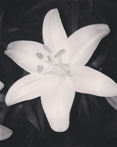 🙃🙃😍 Beauty In Nature Outdoors Flower Blackandwhite