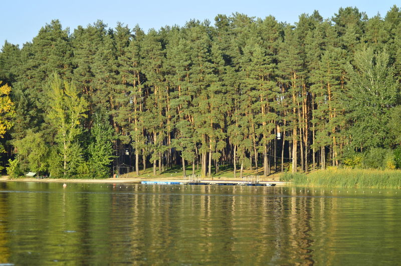 Tree Water
