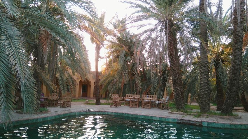 Check This Out Palm Garden Palmtree Hanging Out By The Pool Summertime Natural Pool Natural Spring Natural Spring Water Pool Poolside Pool In The Garden Swimingpool Natural Water Green Living