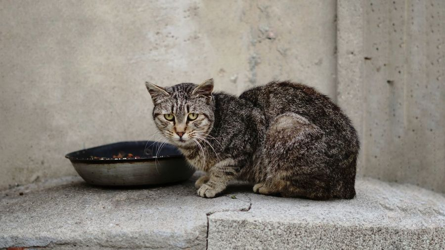 Portrait of cat sitting on concrete wall