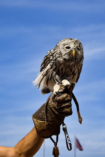 Low angle view of owl perching against sky