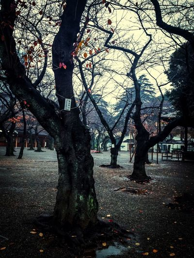 Trees Tree Japanese  Hugging A Tree TreePorn The Darkness Within Ominous Human Vs Nature Shrine Horror