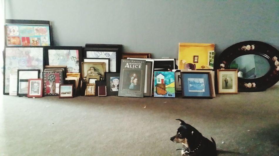 Oberon the art critic. Mifamilia California 2015  Marin County Home Mypup Fairfax Art