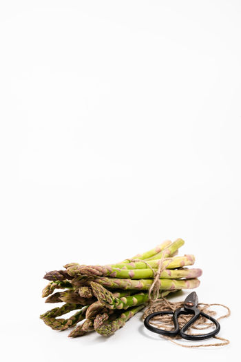 bunch of green asparagus on a white background   food photography Studio Shot White Background Food And Drink Copy Space Still Life Food Indoors  Healthy Eating Freshness No People Vegetable Raw Food Asparagus Close-up Green Asparagus Food Photography Foodphotography Vegetarian Food Bunch Green Color
