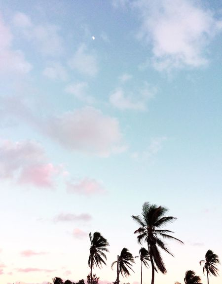 Sky Cloud - Sky Tree Palm Tree Tropical Climate Plant Low Angle View Beauty In Nature Tranquility No People Scenics - Nature Silhouette Tranquil Scene Coconut Palm Tree Sunset Dusk Outdoors
