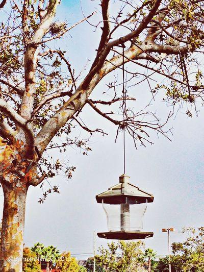 Flippa K Asks: What Inspires You? Clara Filter Eye4photography  Colors Of Autumn Bird Nest & Feeder