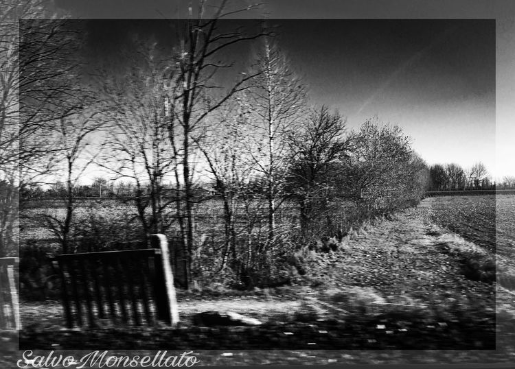 Tree Bare Tree Nature Outdoors Tranquility No People Day Bench Sky Plant Clear Sky Beauty In Nature Grass Blackandwhite SalvoMonsellato