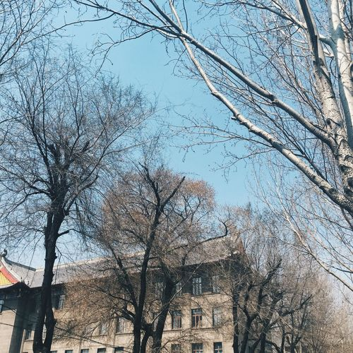 25.04.15 Bare Tree Architecture Building Exterior Built Structure Branch Low Angle View Tree Clear Sky Tree Trunk City Sky Outdoors Day Nature Tall - High City Life No People EyeEm Best Shots EyeEm Best Edits Vscochina 哈尔滨 中国 Tranquility Beauty In Nature