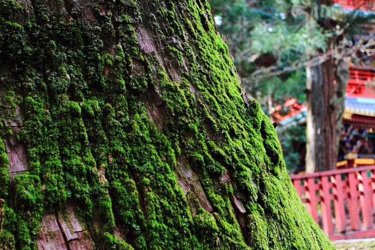 Canon EOS7D Canon EF 17-40mm/F4L Tree Tree Trunk Green Color Growth Nature Focus On Foreground Outdoors No People Day Forest Ivy Beauty In Nature Close-up Freshness Architecture Tadaa Community Eye Em Nature Lover