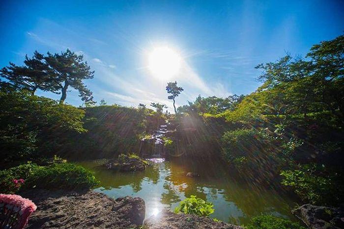 여행도못가는데 사진이나올려야지 제주도 카멜리아힐 여행 풍경 일상 사진 니콘D610 Nikon 광각렌즈 제주 Jeju Photographer_suhyeon