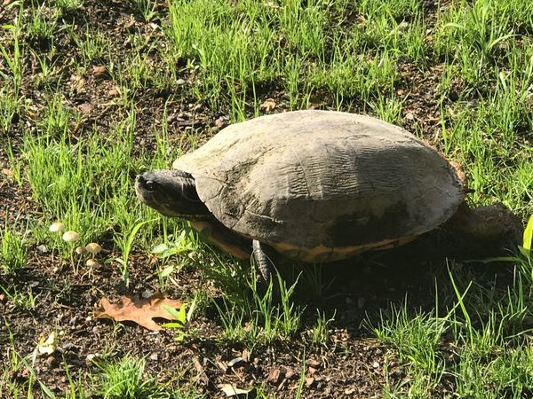 #turtle first eyeem photo