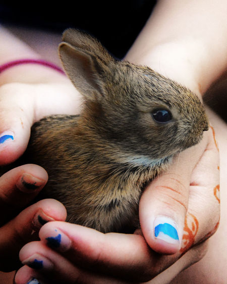 Close-up of woman holding rabbit
