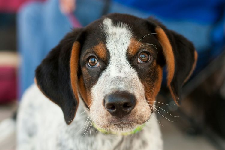 Hi!This confidant puppy is Bob, he is for adoption through Rescue One. www.rescueonespringfield.com Springfieldmo Hello World Dog Love Volunteerphotographer Rescueonesgf Adoptadog Pets Adopt Need A Friend
