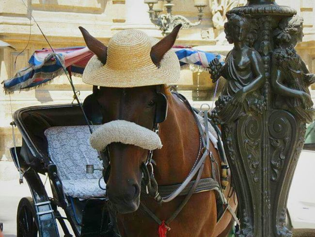 Sicilian horse style Animal Themes Outdoors Statue Working Animal Day Carriage Horses Style And Fashion Palermo❤️ Palermo City Chance Encounters Animals Italytrip Vacations