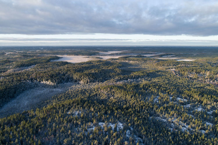 Aerial landscape of boreal forest in winter Finland Boreal Forest Taiga Landscape Nature Outdoors Scenics Tranquility Day Cloud - Sky Beauty In Nature Forest No People Tree Growth Sky Cold Temperature Flower Freshness