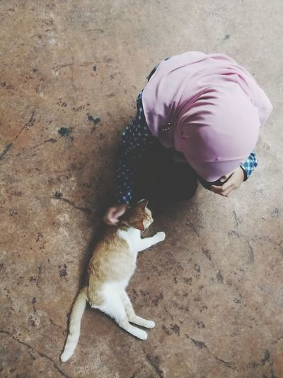 Love unconditionally. One Animal High Angle View Mammal Pets Animal Themes Domestic Animals Outdoors Cats Cats Of EyeEm