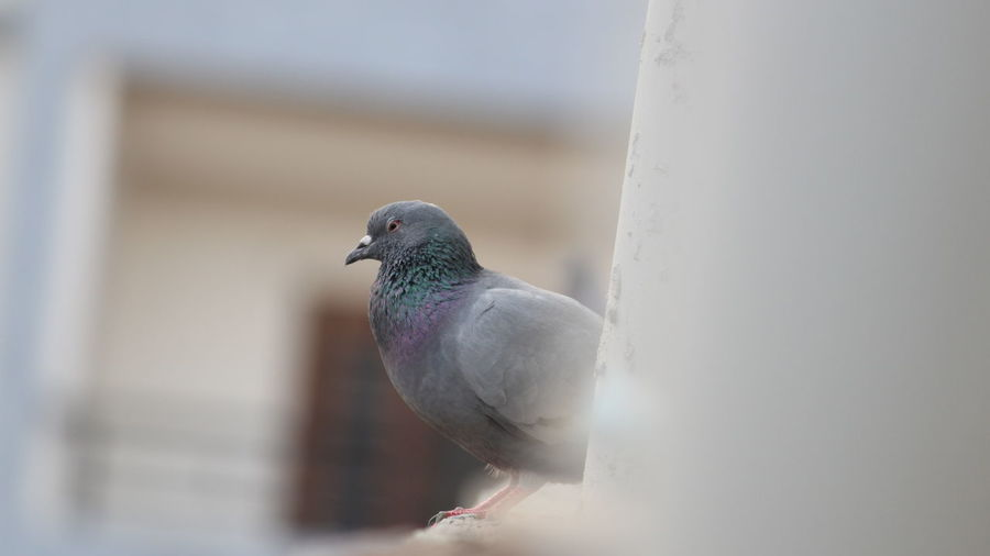Low Angle View Of Pigeon