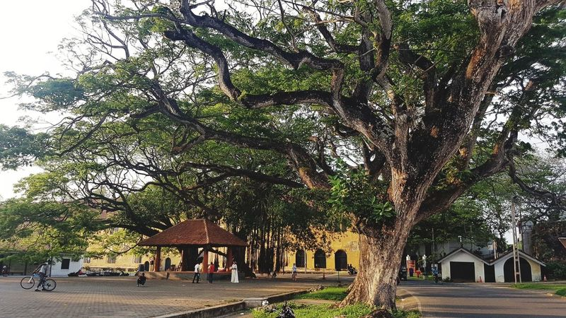 Tree Outdoors Sky Nature Architecture Old Tree Sri Lanka Dutch Fort Galle Fort Historical Tourism Tourism Destination Street Travel Destinations Tropical Climate Nature Tree