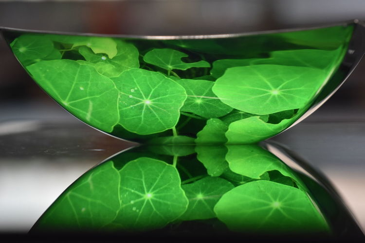 Close-up of green leaves in glass