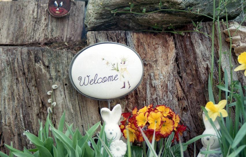 velkam. 35mm Film Exakta 3.5-4.5/35-70mm Film Photography Flower Freshness Germany Nature Rabbits Sign Spreewald Text Welcome