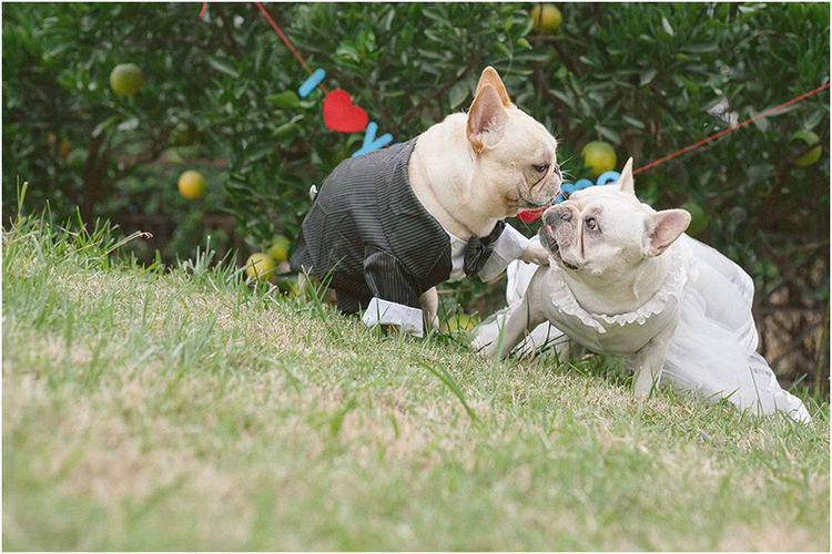 Eye4photography  Frenchbulldogs Cute Pets Playing With The Animals I Love My Dog Pets Canon Love