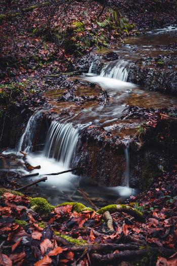 Forest creek waterfall
