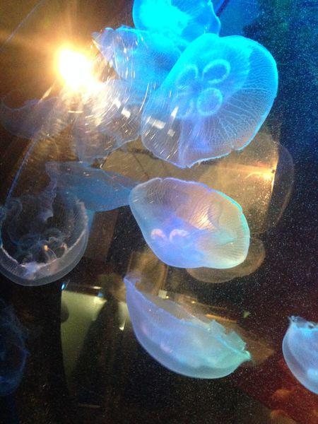 Aquaria Klcc Aquarium Fish Jellyfish Malaysia Sea Life Underwater